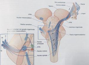 Nevralgia del trigemino e Osteopatia - Riccardo Capello