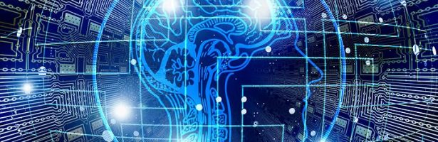 Il Cervello: struttura e funzione.